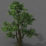 六颗精致的榕树模型
