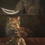 野生动物绘画教程包